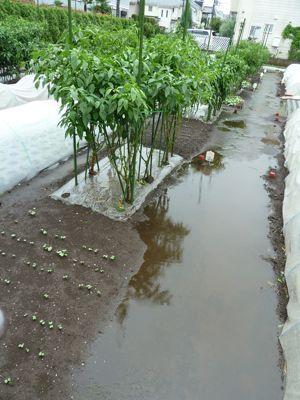 0921農園は大雨.jpg