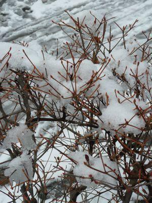 木と雪.jpg