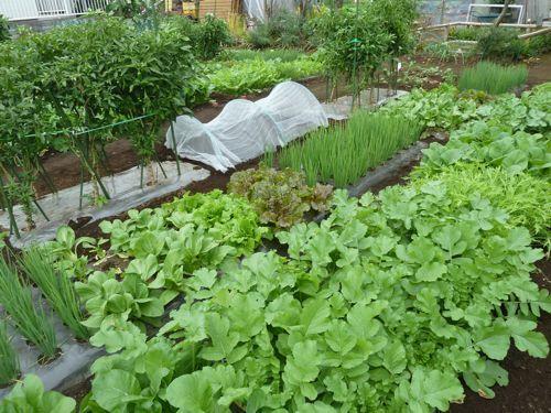 農園1021.jpg